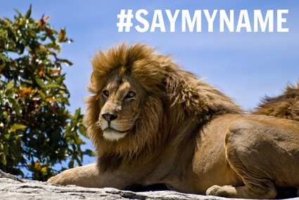 SayMyName - Male Lion on Rock