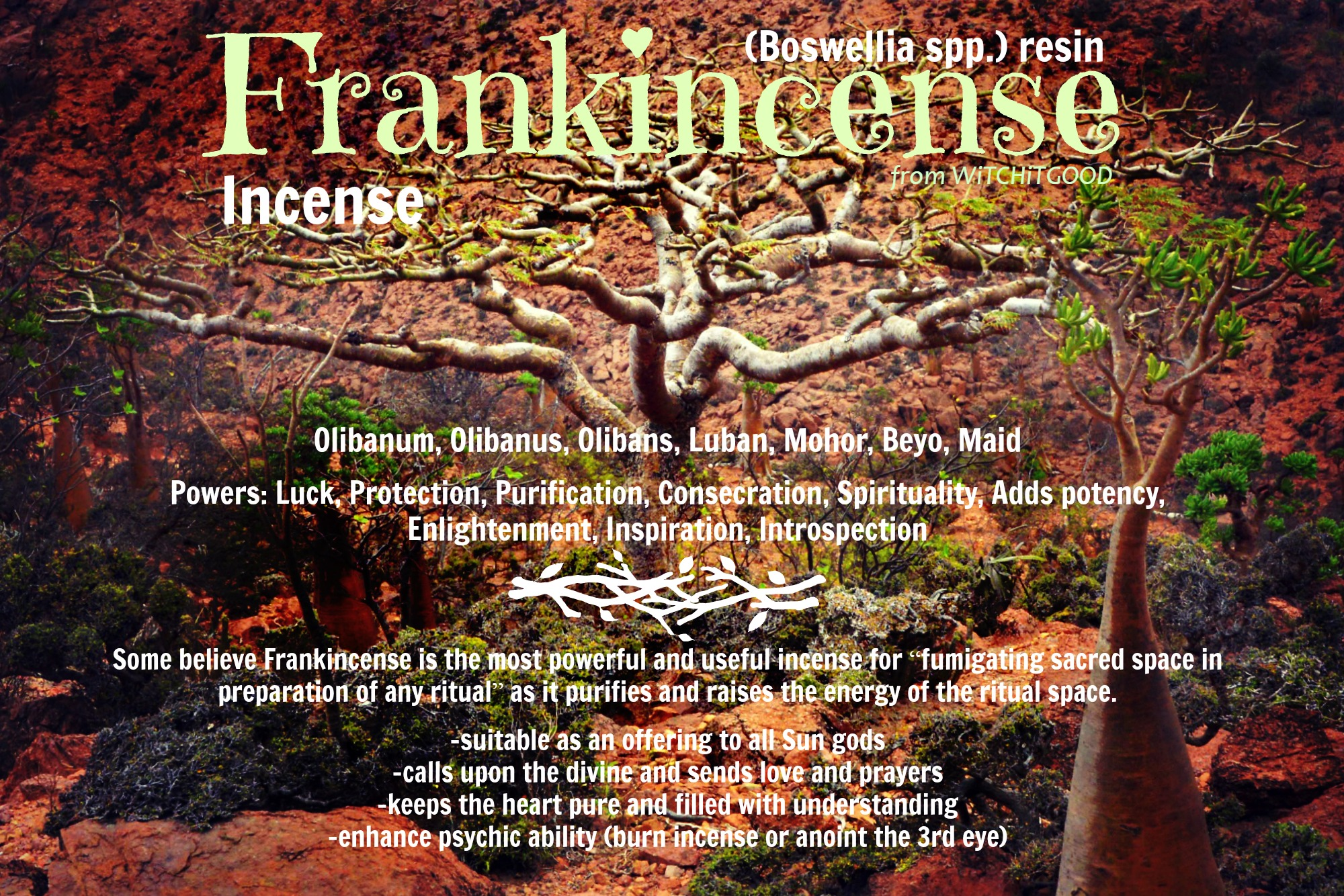 The Magic of Frankincense - Atheona's Stillpoint - Witch It Good
